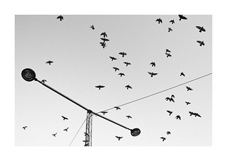 Birds and wire