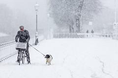 Krijg een Nederlander maar eens van zijn fiets (Bart Weerdenburg) Tags: winter snow sneeuw cold ice netherlands nedeland holland bike cycling utrecht