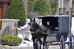 SHOPPING TRIP  (Explored-Thanks everyone) (outdoorpict) Tags: horse buggy amish covered winter cold blinders oldfashioned better times simple hayburner street marketing