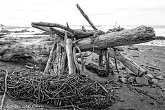 Beach Structures 101 (lorinleecary) Tags: beachscapes cambria centralcoastcalifornia beachscenes blackandwhite driftwood seaweed structures