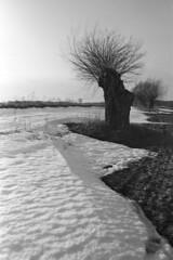 The Defender (czerwiony Smãtk) Tags: willow snow rolleiretro100 blackandwhitelandscape landscape europe sun bw poland tree country