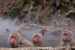 Snow Monkey (Makoto Naito) Tags: snow monkey nagano japan 2016 onsen