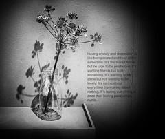 Shadow (Bill Eiffert) Tags: deep sadness depression loneliness shadow flowers dead