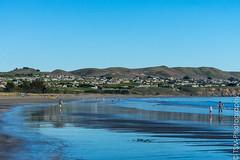 _IMG1618 (blackcloudbrew) Tags: hd55300 pentaxk3 beach bodegabay doranbeach northcoast sonoma sonomacoast sonomacountyparks california unitedstates us