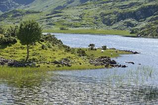 Lac et moutons