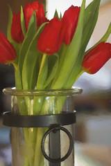 Vase of tulips (Karon Elliott Edleson) Tags: 7dwf florafridays arrangement flowers painting