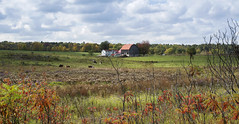 our memories 4 (Barbara A. White) Tags: torbolton landscape farmland farmstead horses barn paddock fall autumn 2016 canada