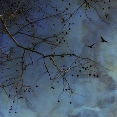 Blue sycamore. (jeanne.marie.) Tags: iphoneography iphone7plus winter tree sycamore textured blue 100xthe2018edition 100x2018 image25100