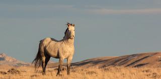 The Good Stallion