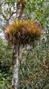 20171214_105607 (jaglazier) Tags: 121417 2017 alambi andes bromeliads copyright2017jamesaferguson december deciduoustrees ecotourism ecuador epiphytes pichincha quito reservaalambi trees cloudforest flowers plants distritometropolitanodequito