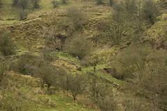 GreenGutter (Tony Tooth) Tags: nikon d7100 gully gutter stream brook moors moorland staffordshiremoorlands staffs staffordshire gradbach greengutterhead countryside hillside sigma 1750mm
