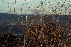 Twigs (Kelson) Tags: hahnpark kennethhahnstaterecreationarea hiking nature goldenhour