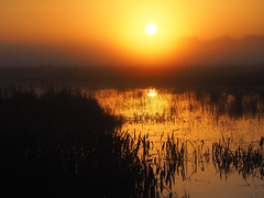 Just another swamp sunrise (joiseyshowaa) Tags: 20150106sunriseandbaby water lake reeds weeds sun rise dawn dusk sunset set twilight orange silhouette nature pasco hernando county hillsborough tampa san antonio st leo university