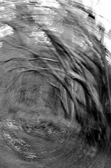 P52 Week 3 | Intentional Camera Movement (ICM) (Steph*Powell) Tags: icm intentionalcameramovement tree woodland woods monochrome bw nikond5100