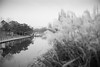 07834 (New unicorn) Tags: landscape blackwhite bw beautiful refelction river road tranquility travel winter weather water weed wild windy woods peaceful people photography path park lake tree scenery street streetphotography scene sky