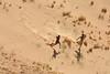 Cuando bajar es un juego. (Victoria.....a secas.) Tags: africa sáhara chad ennedi desierto desert duna dune