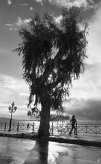 Training (vangelistzertzinis.weebly.com) Tags: tree training joking piraeus sea seascape coast greece