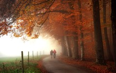 TillTheEnd (BphotoR) Tags: forest woods couple walking paar love end tilltheend bphotor fog together road november autumn germany
