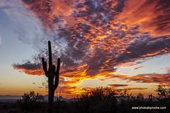 Another sunset (doveoggi) Tags: 8835 arizona scottsdale mcdowellsonoranpreserve desert sunset saguaro