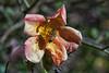 Small Beginnings (Jeremy Brooks) Tags: bee california carmelvalley fattoriamuia flower macro montereycounty nature pollenate usa