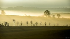 30012018-DSC_0012 (vidjanma) Tags: matin brume arbres ombres couleurs ardenne