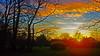 La Roche sur Yon - FRANCE (manguybruno) Tags: paysage sky nature tree clouds parc pro landscape forest