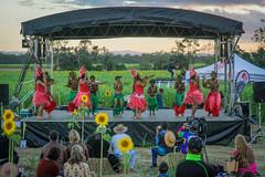 cherriehughesphotographer-0358 (bilateral) Tags: sunsetsymphonyinthesunflowers sunflowers sugarcane celebration music orchestra sakwolo assi australiansouthseaislander agriculture concert farm simonmattsson sugarvsthereef