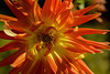 Flowers. (ost_jean) Tags: nikon d5200 900 mm f28 ostjean fleurs colors