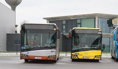 STIB-MIVB 8971 / SRWT 5550 (Public Transport) Tags: solaris bus autobus
