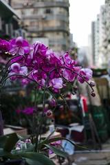 FLOWER MARKET (STREETS OF HONG KONG...) Tags: orchids hongkong mongkok