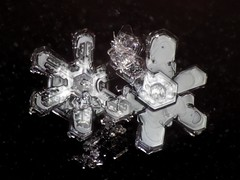 4jan18D (peterobrien186) Tags: winter snow snowflakes snowcrystals crystals macro nature tow