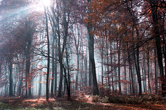 Enchanted forest (red.fox.child) Tags: forest woods trees fog light nature canon canoneos600d hiking croatia autumn hazy sunny fantasy magical enchanting