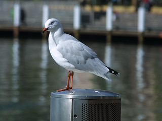 Seagull, Darling Harbour, Sydney, March 11th 2003