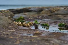 Holding On (Stueyman) Tags: sony ilce alpha a7 a7ii nsw newcastle australia au water limpet rockpool pool sky 85mm