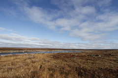 Flat arctic landscape in the summer with blue skies and soft clouds (Blue Tale) Tags: rock water shore landscape grass sky nature outdoors river ecosystem outdoor wetland ecoregion tundra travel scenery cloud field summer daylight horizon fairweather arctic arcticlandscape arviat blue canada centralarctic cold day ground isolated land north northern polar nunavut nunavutcanada place polarregion season clouds sunny treeless rocks large cloudy brown white fall