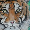 Tiger (herneysartista) Tags: tiger draw drawing skech ilustración ilustration clasesdearte arte art naturaleza paisaje landscape pets mascota animal salvaje áfrica india zoo zoológico ch colombia dibujoconcolores
