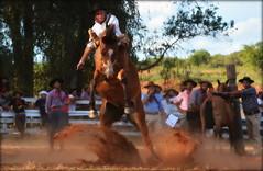 Camejo e Truco da Macanuda (Eduardo Amorim) Tags: gaúcho gaúchos gaucho gauchos cavalos caballos horses chevaux cavalli pferde caballo horse cheval cavallo pferd pampa campanha fronteira quaraí riograndedosul brésil brasil sudamérica südamerika suramérica américadosul southamerica amériquedusud americameridionale américadelsur americadelsud cavalo 馬 حصان 马 лошадь ঘোড়া 말 סוס ม้า häst hest hevonen άλογο brazil eduardoamorim gineteada jineteada