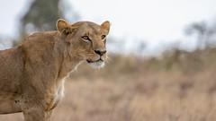 Nairobi-Nationalpark-9594 (ovg2012) Tags: kenia kenya nairobi nairobinationalpark