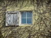 A Bit Viny (clarkcg photography) Tags: window shutter singleshutter door closure wall vines panes windowwednesday