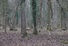 CKuchem-5815 (christine_kuchem) Tags: 14 2018 45 baumstamm baumstumpf bienen bienenstock blätter bäume forst hambacher honigbienen impker impkerei januar kiste kästen laub löcher markierung moos nisthöhlen rinde stamm tagebau totholz wald waldspaziergang winter wurzel äste
