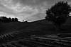 (Inner) peace & olive tree / small and yet significant (Özgür Gürgey) Tags: 2018 20mm bw büyükçekmece d750 nikon sancaklarcamii voigtländer architecture clouds olive people quiet silhouette sky steps stones street tree wall istanbul