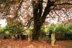 automne près de Sarlat (guy dhotel) Tags: automne arbre muret chaumière
