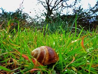 Snail..green..and rain.