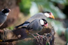 Finches (Afraz Anosh) Tags: rainforest greenplanet dubai finch bird birds