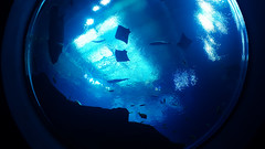 Deep blue (kaylasolon) Tags: aquarium sea ocean water fish plants blue deepblue aesthetic
