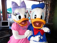 Daisy and Donald Duck (meeko_) Tags: daisy duck daisyduck donald donaldduck characters disneycharacters hollywoodboulevard disneys hollywood studios disneyshollywoodstudios themepark walt disney world waltdisneyworld florida