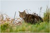 kat (Hetwie) Tags: poes kat vijver brouwhuis katze wijkpark kanaal helmond noordbrabant nederland nl