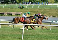 "2017-06-30 (57) r9 Steve Hamilton on #4 Gator Boy (JLeeFleenor) Tags: jockey جُوكِي jinete dżokej jocheu คนขี่ม้าแข่ง jóquei žokej kilparatsastaja rennreiter fantino 기수"" жокей jokey người horses thoroughbreds equestrian cheval cavalo cavallo cavall caballo pferd paard perd hevonen hest hestur cal kon konj beygir capall ceffyl cuddy yarraman faras alogo soos kuda uma pfeerd koin حصان кон 马 häst άλογο סוס घोड़ा 馬 koń лошадь photos photography md maryland marylandhorseracing marylandracing outside outdoors"