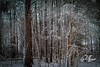 (crfleury) Tags: crfleury 2018 canon raleigh nc snow winter cold woods 2470f28lusm 7d