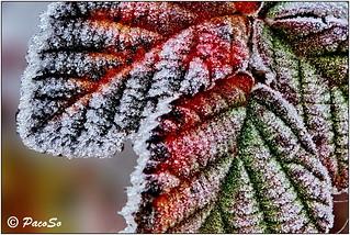 Macro invernal